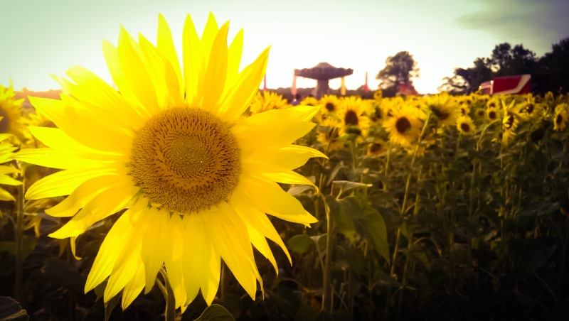 2014-07-26 19.54.25_edited
