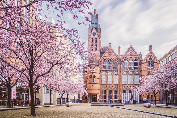 Cherry Blossom outside the Ikon Gallery, Birmingham